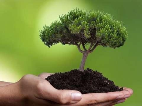fytodentro.jpg